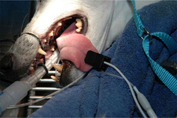 Lingual sensor